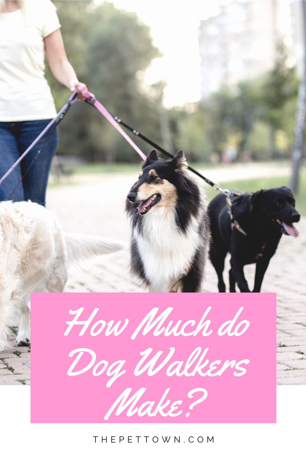 How Much Should You Get Paid To Walk A Dog