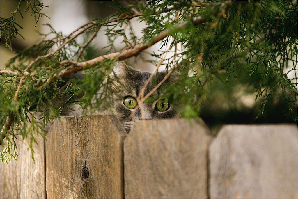 Lijkt Je Tuin Wel Een Kattenbak Zo Kun Je Katten Uit De Tuin