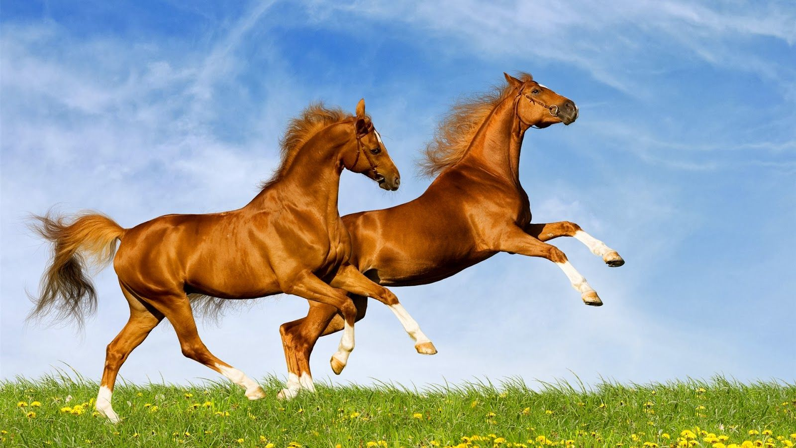 Hd Wallpapers Desktop Horse Free Horses Horse Wallpaper Beautiful Horses