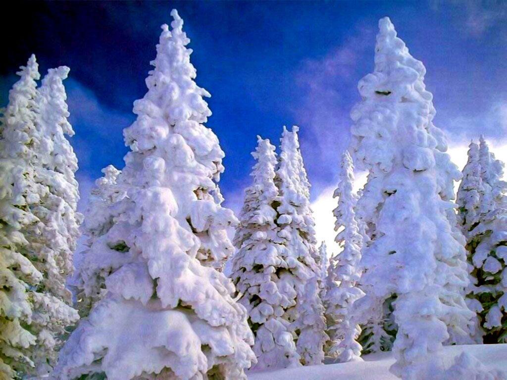 Анимация картинка зима в лесу, айт картинки приколы