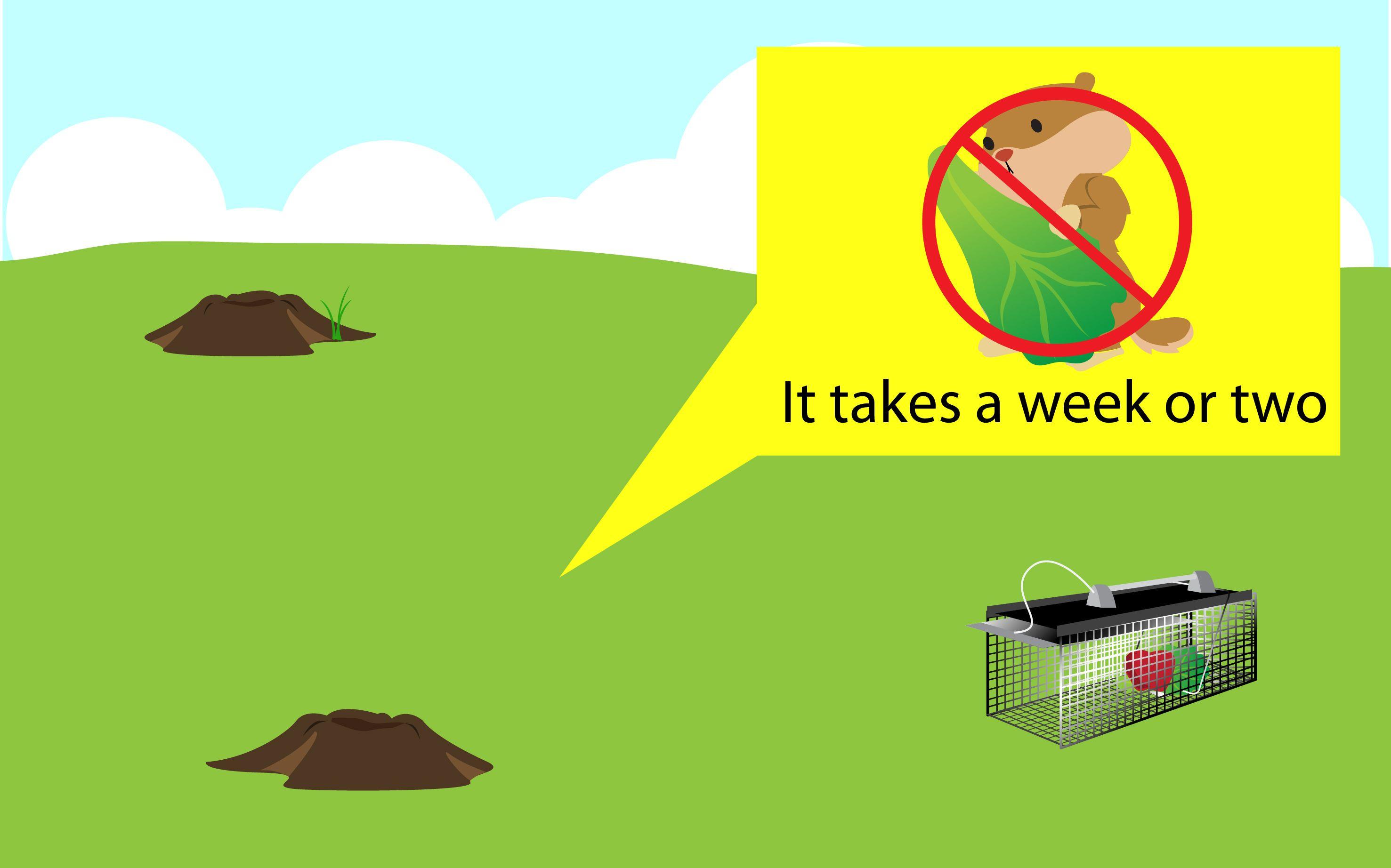 Get Rid of Groundhogs Get rid of groundhogs, Garden
