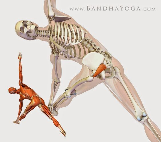 Hotornotviral: Healing with Yoga: Piriformis Syndrome | Sketch ...