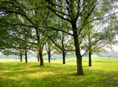 Spicer-Mullikin Living Memorial Tree Planting Program