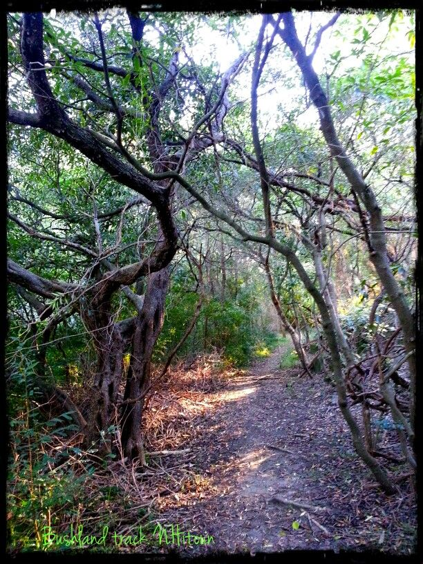 Bushland track Wolli Creek Valley Earlwood end. Winter. by Natalie Hitoun