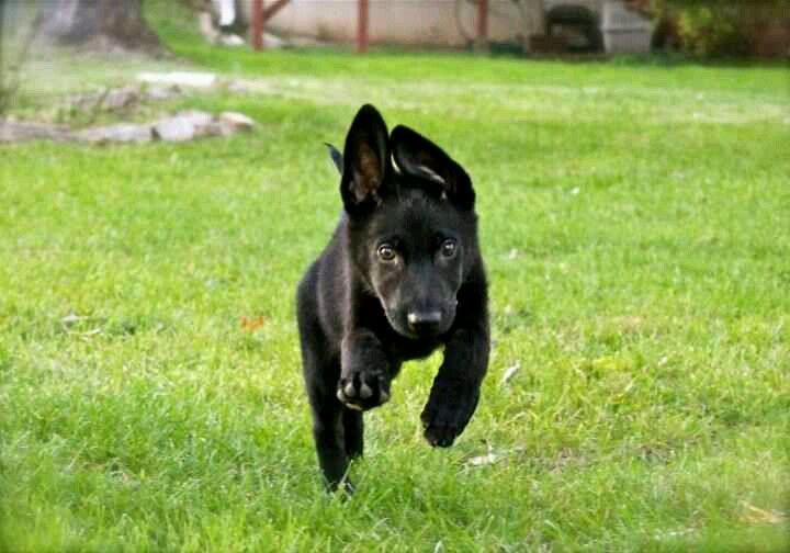 Fast as the wind! Look at those ears!