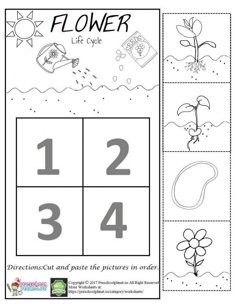Flower Life Cycle Worksheet Plant Life Cycle Worksheet Life Cycles Preschool Worksheets