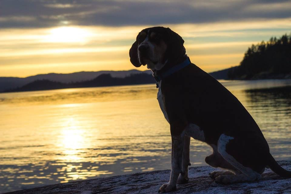 Beautiful Powell River BC #coonhound#bc #beautiful