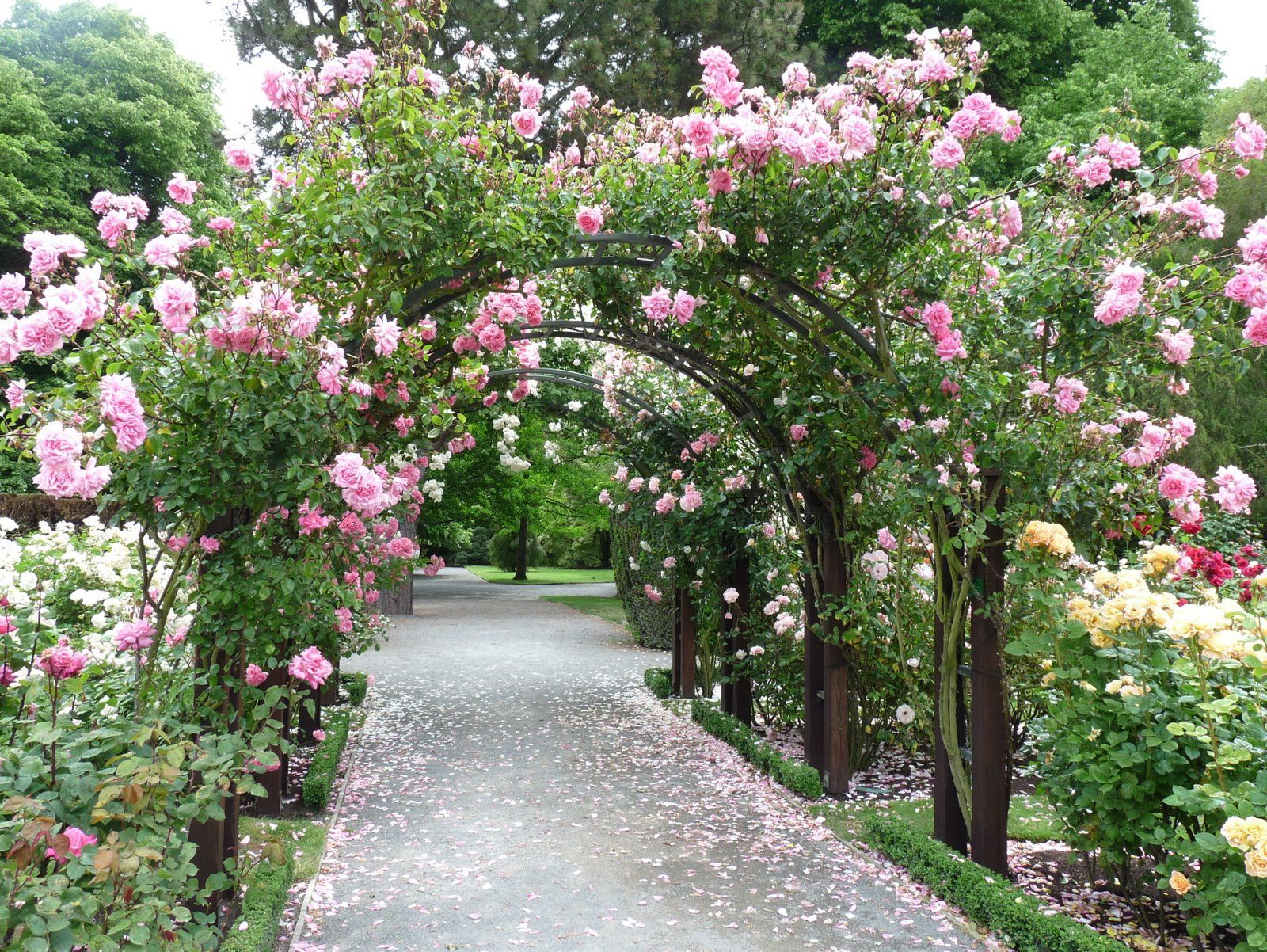 Stop and smell the roses | Garden arches, Most beautiful ...