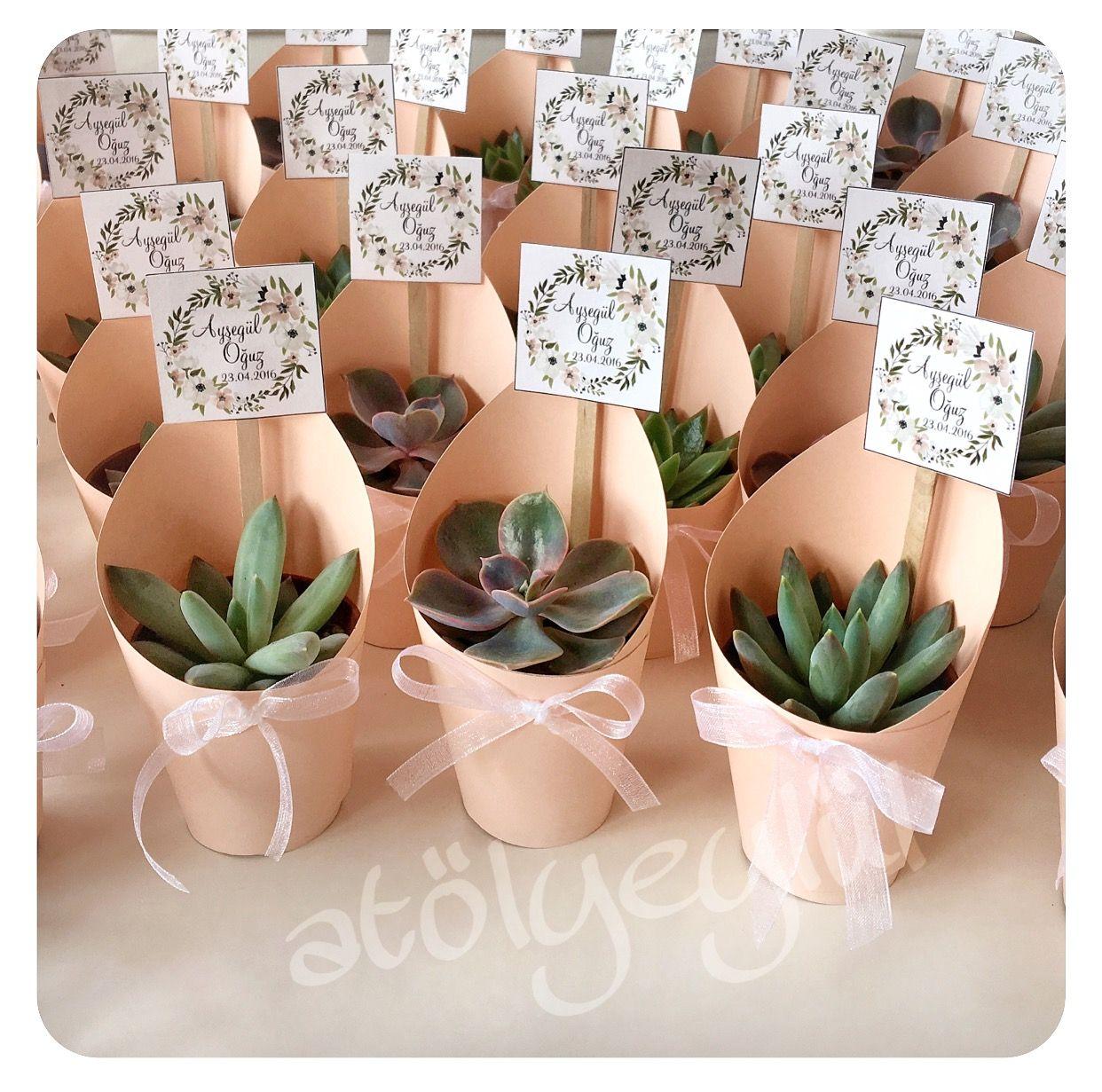 Mini Sukulent Mini Succulent Kakt 252 S Cactus Wedding
