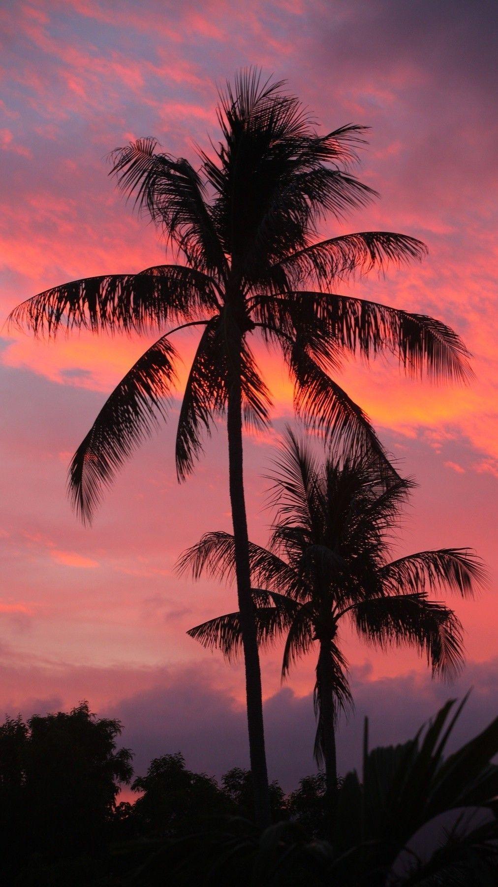 Decembrefondecran Sanjiv Zachary Sunset Wallpaper Sky Aesthetic Palm Trees Wallpaper