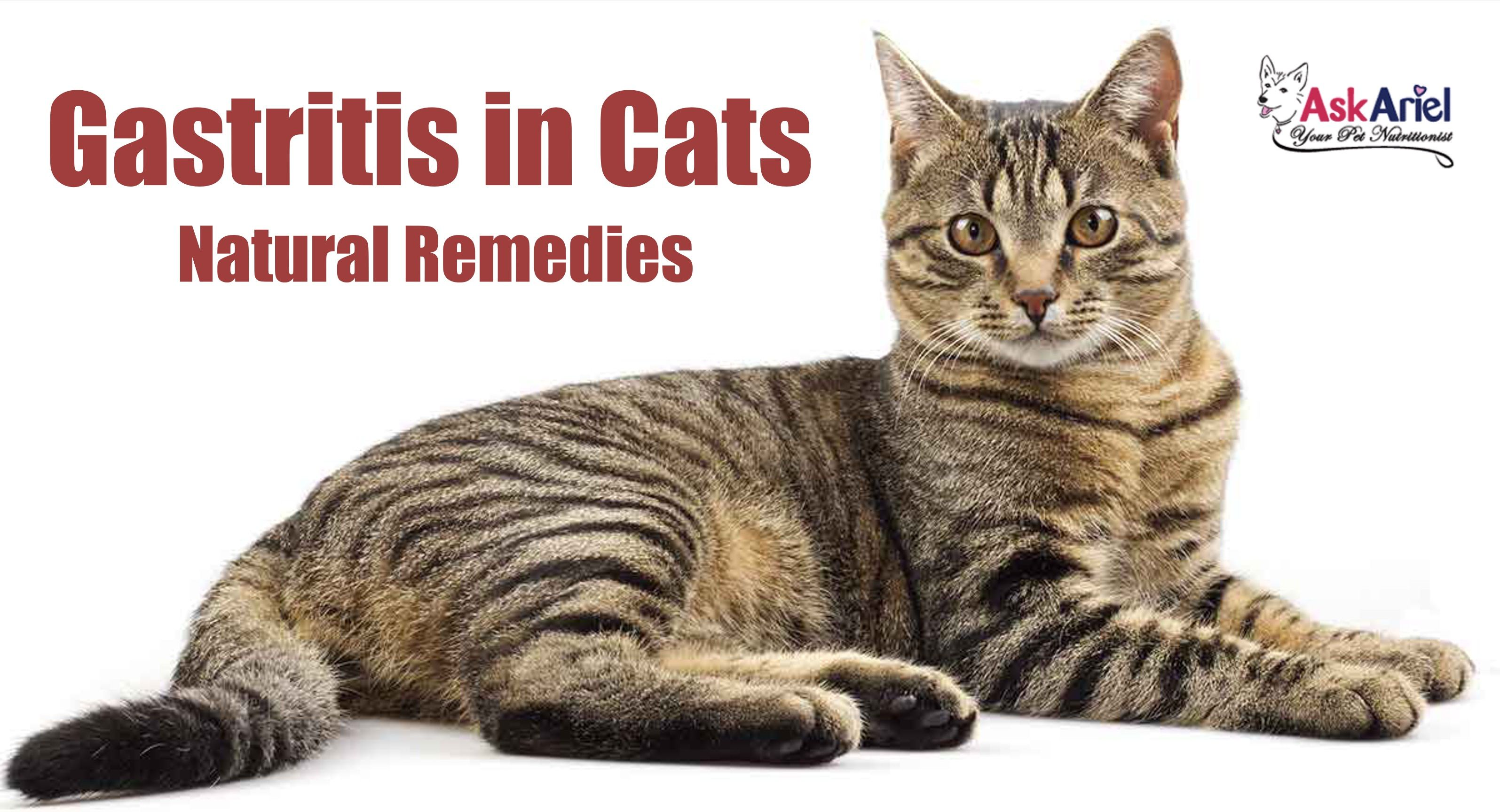 Pin on Cats Health Problems