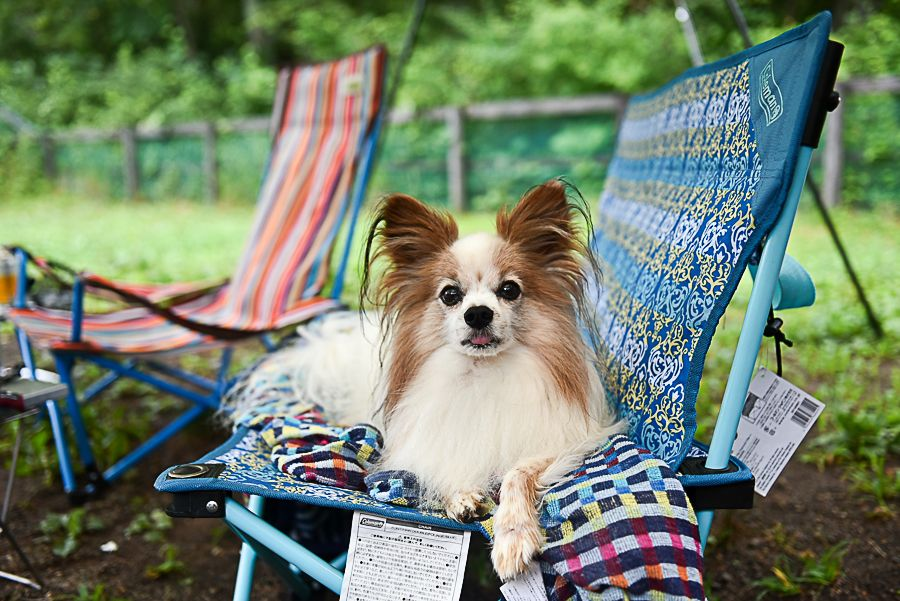 今夏は特にキャンプ場の予約に苦労しました それだけ愛犬との旅行はもちろん キャンプを楽しむ家族が増えているんですね そして近年ドッグラン付き貸別荘的な 宿泊施設やグランピングなども急増していますが 今回はもっと手軽にコスト ドッグラン 犬 キャンプ 旅行