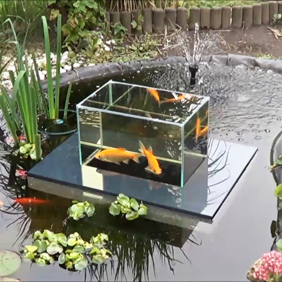 Goldfish swimming above the pond nothing koi about it for Goldfish pond ideas