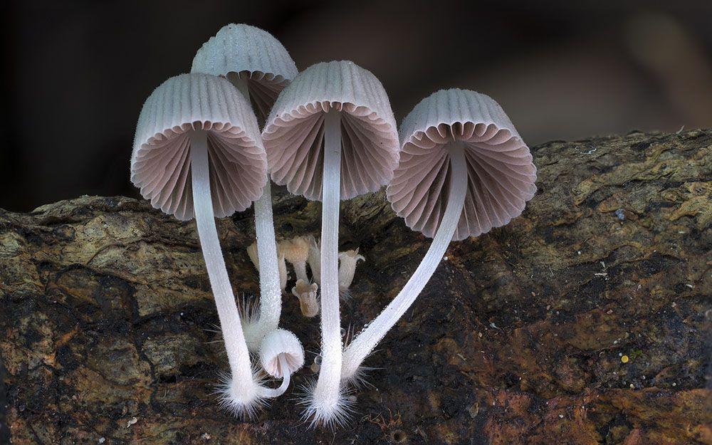 Resultado de imagem para cogumelos lindos