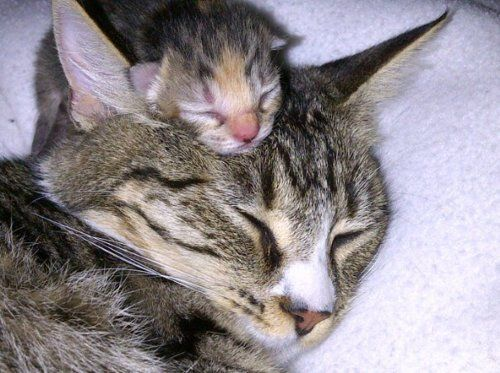 Newborn Kittens Cute But You Really Aren T Supposed To Handle