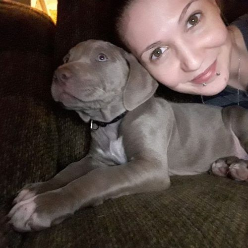 Lostpuppy Lost Blue Nose Pitbull Puppy Wichita 67214 Kansas
