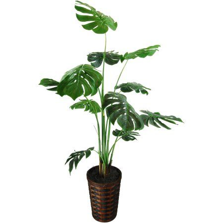 Free Shipping Buy Split Leaf Philodendron Floor Plant In A Basket