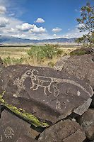 A petroglyph of a cat like creature is etched on a boulder framed by the distant Sacramento Mountains at Three Rivers State Park near Tularosa, New Mexico