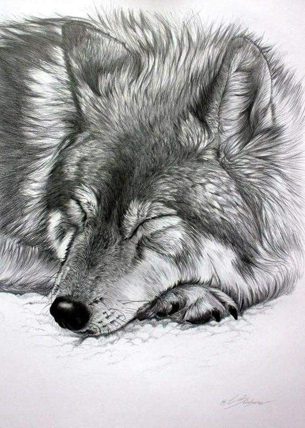 Pin By Joyce M On Dogs In 2018 Dessin Dessin Realiste Loup Dessin