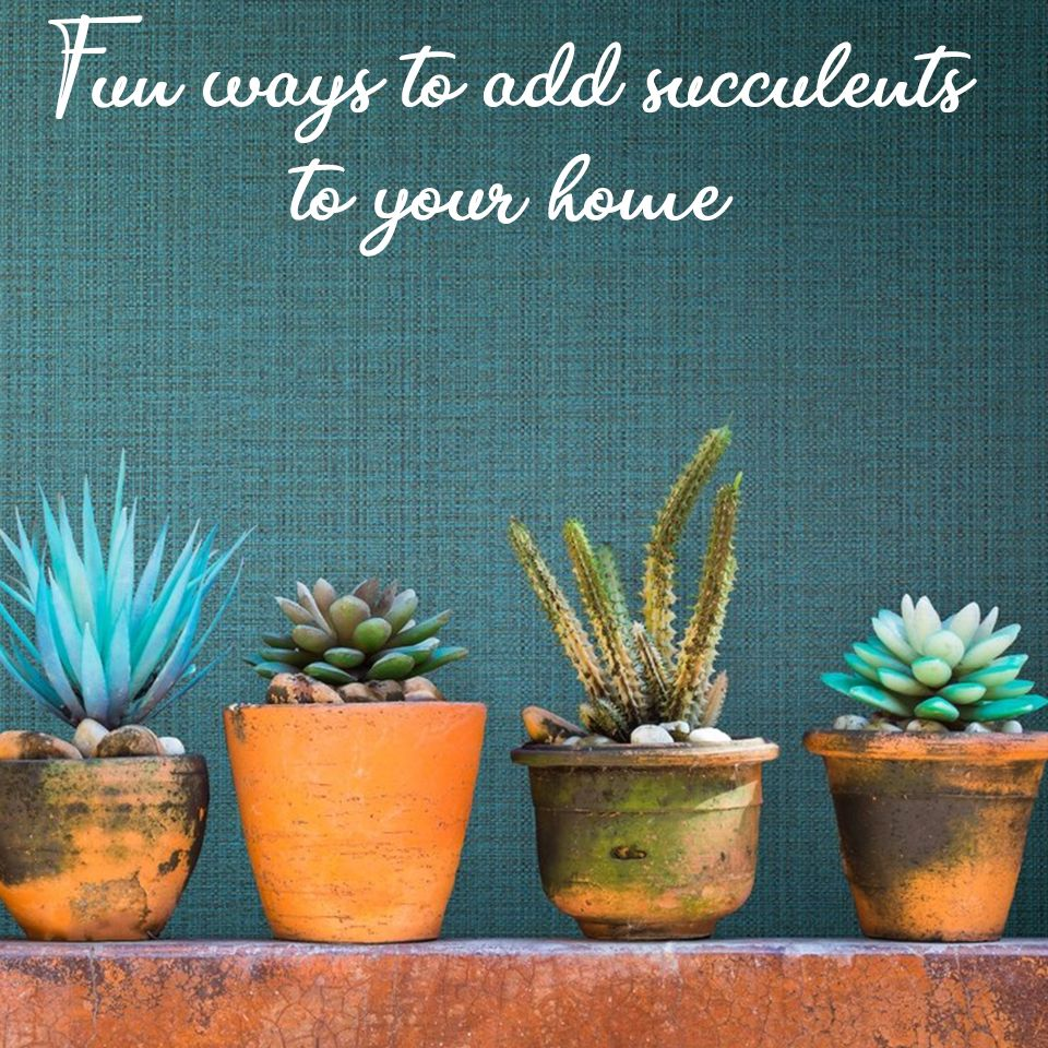 The Succulent Trend Is Here To Stay Head Over To The