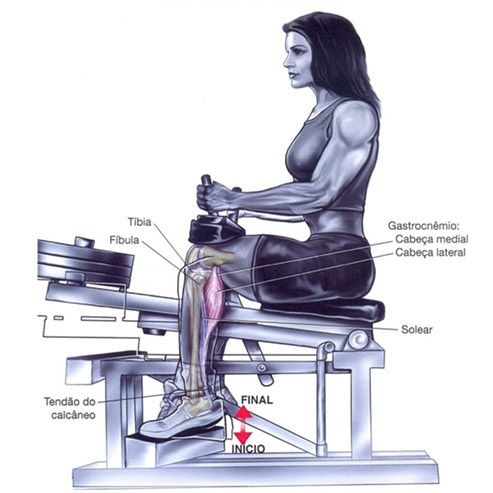 Panturrilha Sentado Com Resultados Excelentes Exercicio Pernas