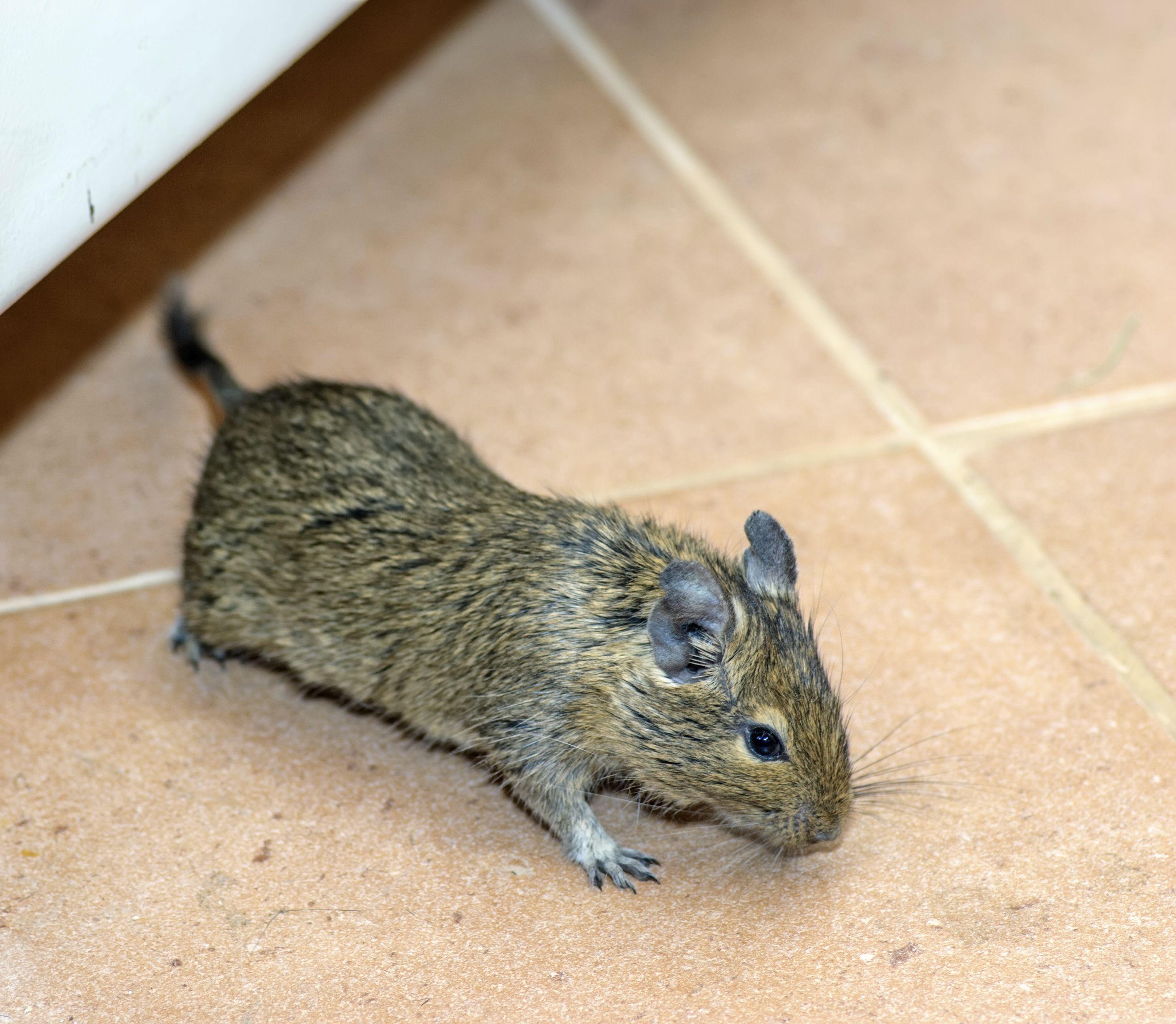 827da1c7e1320ee98c8490359a304214 - How To Get Rid Of Mice In Compost Bin