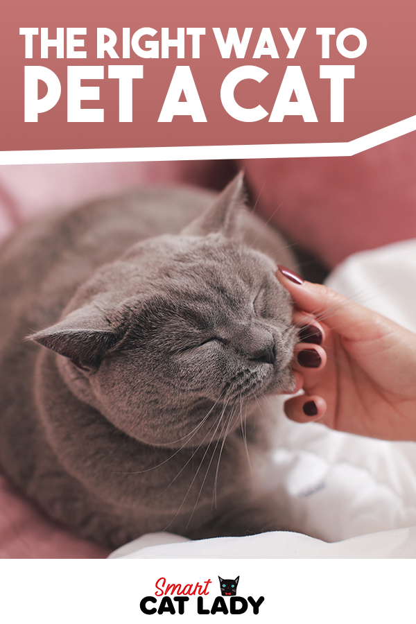 Ever Find Yourself On The Receiving End Of Cat Bite When You Pet Your Cat You Re Probably Petting Your Cat Wrong Here S The Right Way To In 2020 Cats Cat Biting