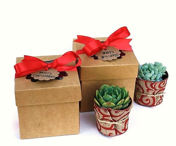 Succulent Gift Box Gift For Succulent Lovers Anniversary