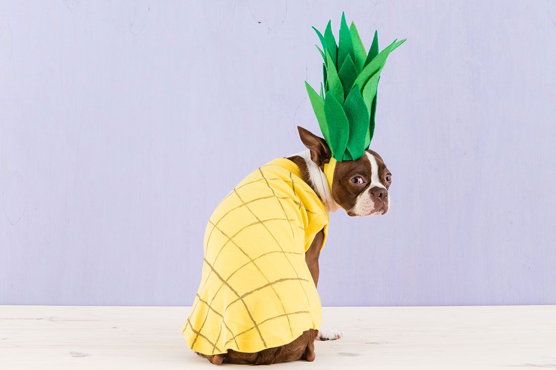 How to dress up your dog in a diy pineapple costume pet