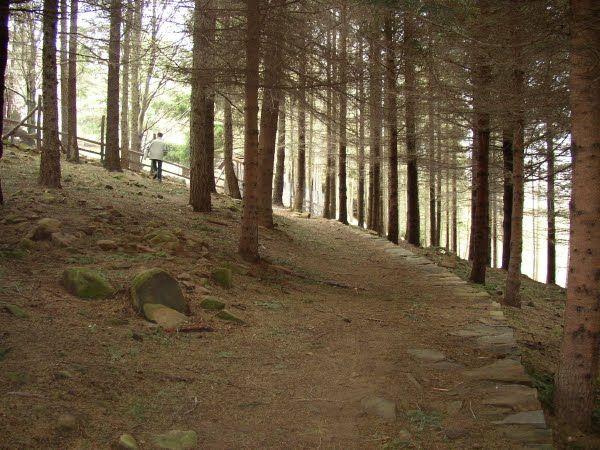 ...para caminar y caminar mirando al piso y buscando hongos...Parque Orechiella, cerca de Caprignana en La Garfagnana (Toscana)