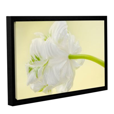 "House of Hampton 'White Parrot Tulip I' by Cora Niele Framed Graphic Art on Wrapped Canvas Size: 24"" H x 36"" W x 2"" D"