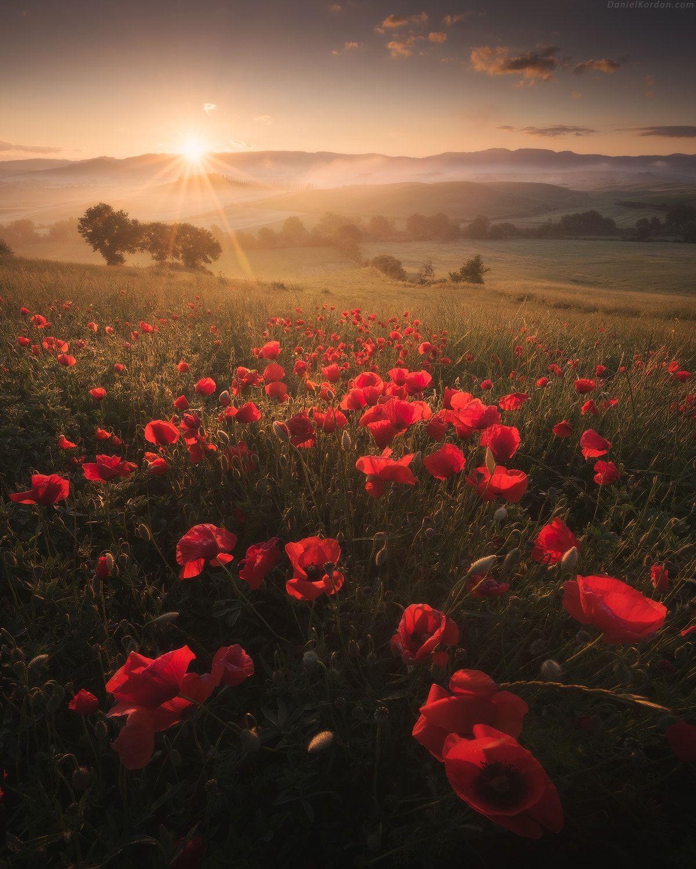 Spring Tuscany - )