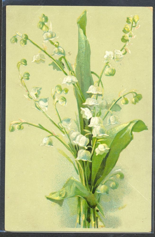 NB008 KLEIN ? MUGUET LILY of the VALLEY FANTAISIE Belle LITHO