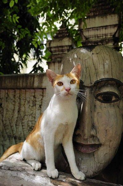 La statue de bois et le chat par Le Chat Photographe