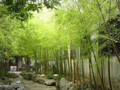 Shanghai chinatown bamboo garden Bamboos Pinterest