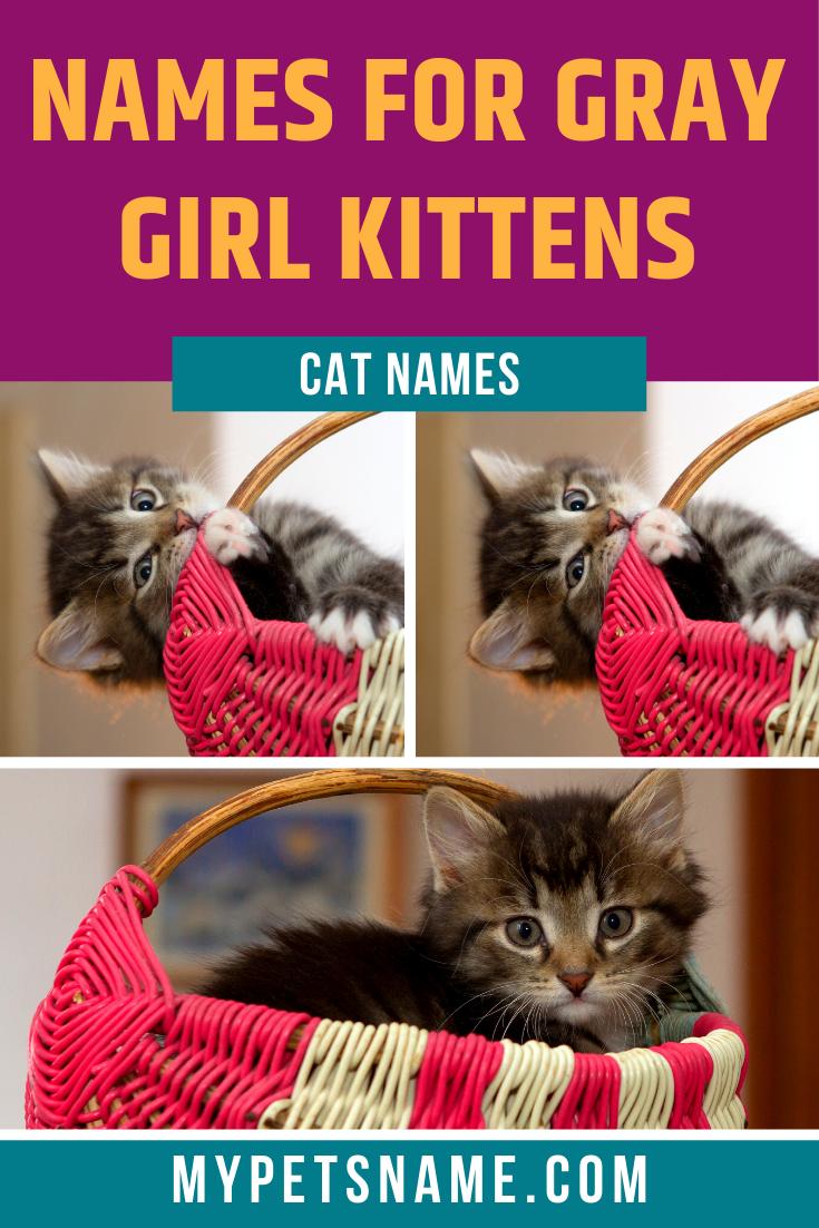 Girl Gray Cat Names In 2020 Grey Cat Names Tabby Cat Names Cat Names