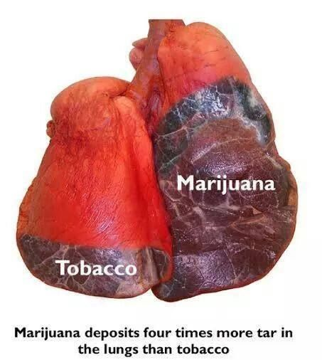 emphysema smoking and american lung association The association between heavy, long-term smoking and lung problems has  of  the most prominent, jama (the journal of the american medical association.