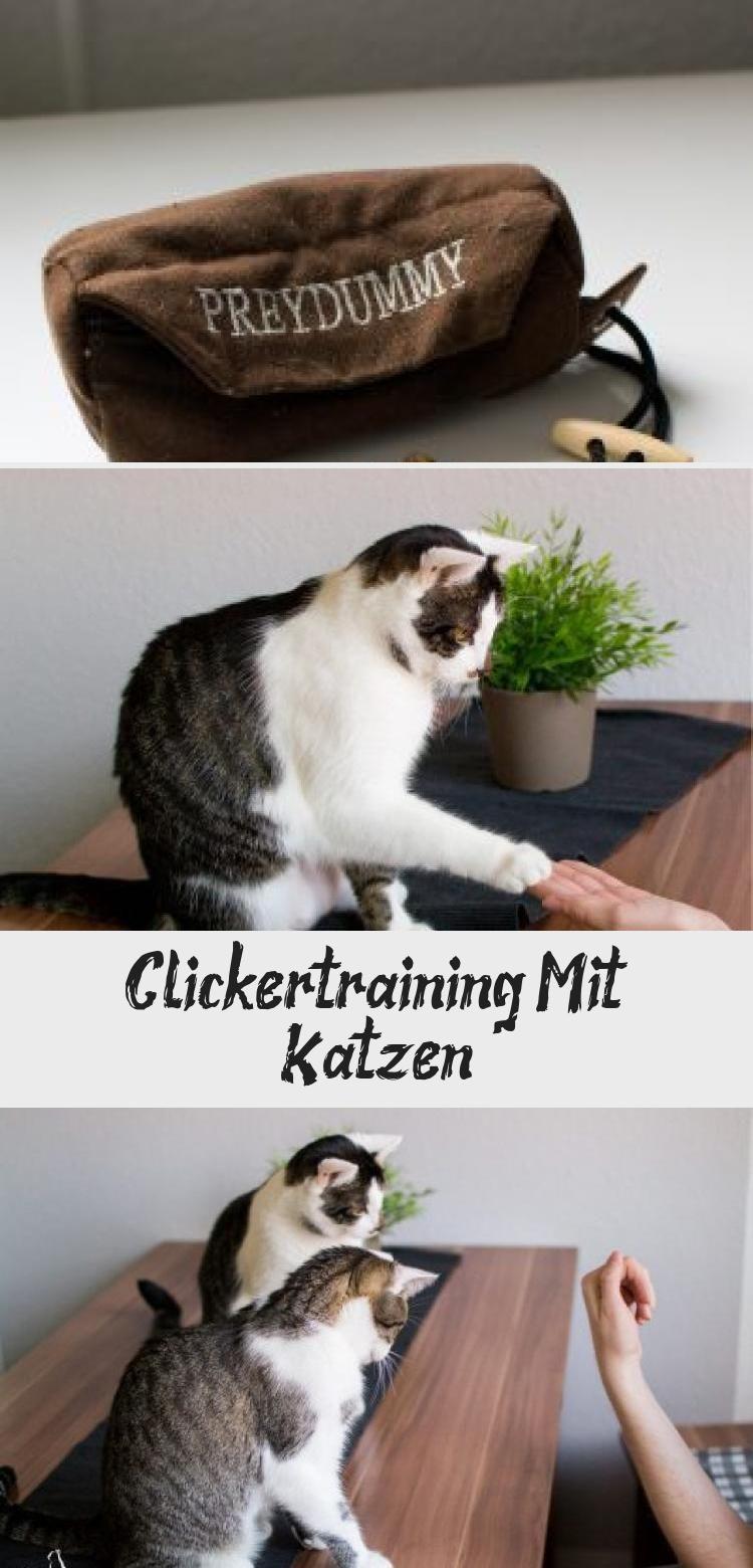 """Die meisten unter euch werden wohl schon das ein oder andere Mal vom """"Clickertraining"""" im Zusammenhang mit Tierkonditionierung gehört haben oder praktizieren es bereits fleißig. Dies ist eine gute Möglichkeit, um die Tiere, in diesem Fall Katzen, neben der täglichen körperlichen Auslastung auch mental bzw. geistig zu beschäftigen. WAS GENAU… #KatzeGeburtstag #KatzeGetigert #KatzeLiebe #BirmaKatze #KatzeGezeichnet #katzengeburtstag"""
