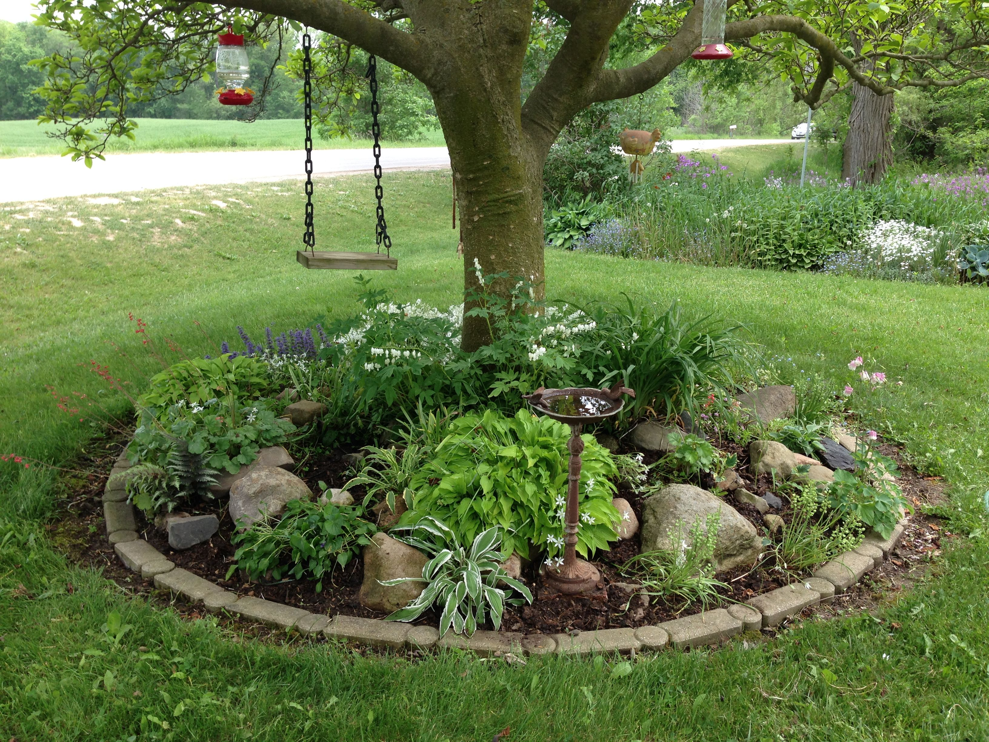 my rock garden under my magnolia tree includes miniature hosts snow in summer coral bells white bleeding heart and