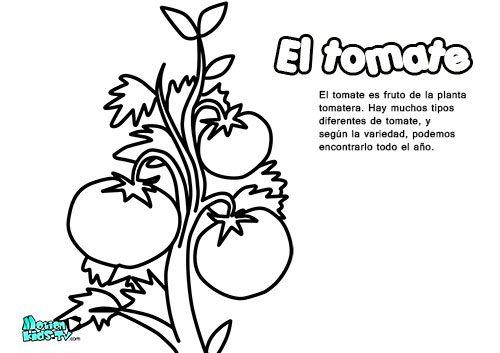 Dibujos Animados Texto Naranja: Dibujos Colorear Para Niños, El Tomate. Educativos Frutas