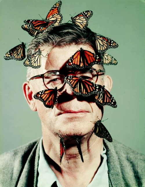 Butterfly breeder , photographed by John Dominis for LIFE Magazine,1954