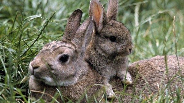 La Mama Y Su Bebe Animales Conejos Wallpaper Suaves Conejos