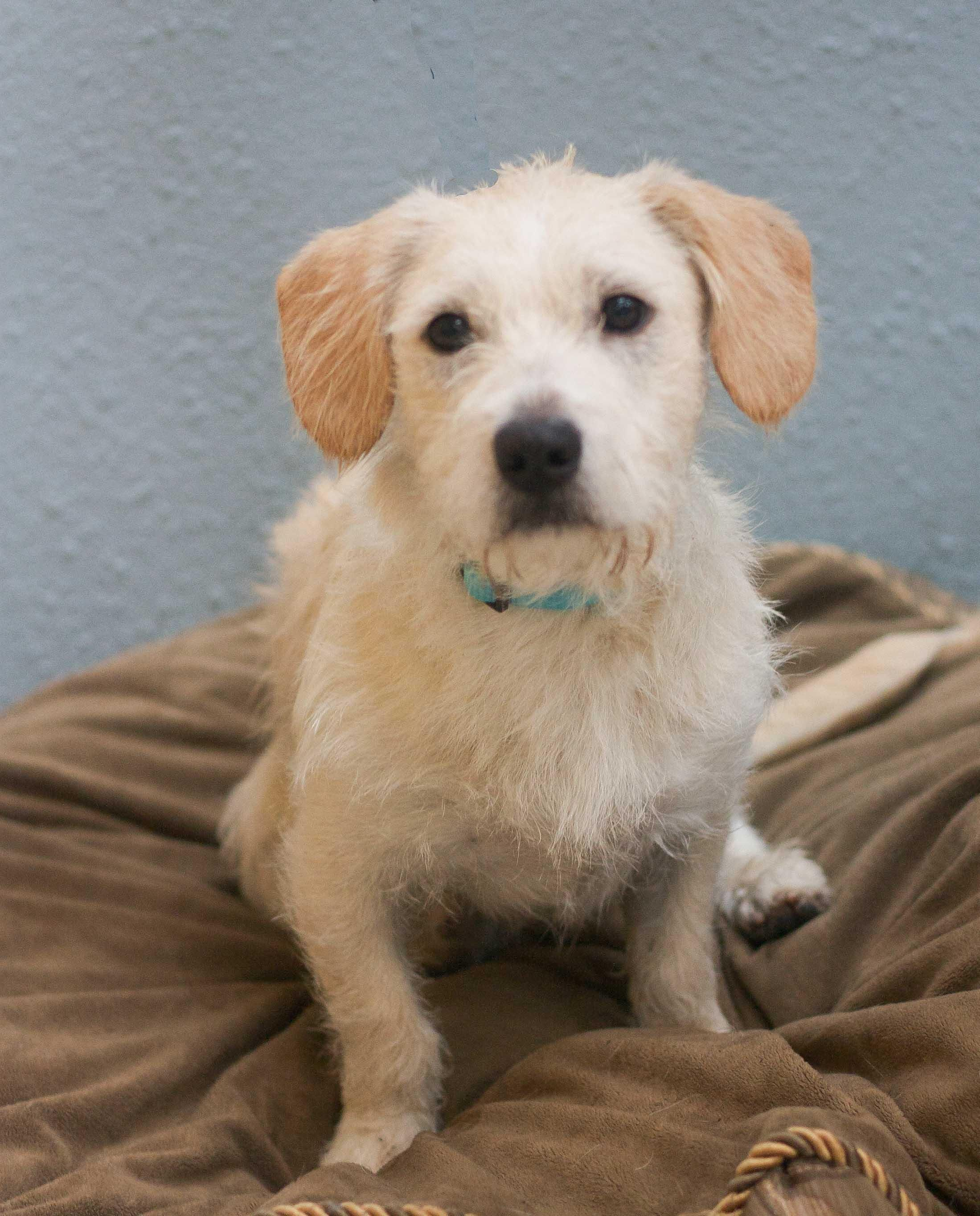 Adopt Clyde on