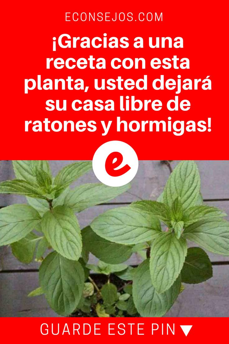 Como Acabar Con Las Pulgas En El Jardin Gracias A Una Receta Con Esta Planta Usted Dejara Su Casa Libre