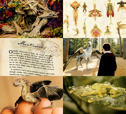 Hogwarts subjects Care of Magical Creatures Care of