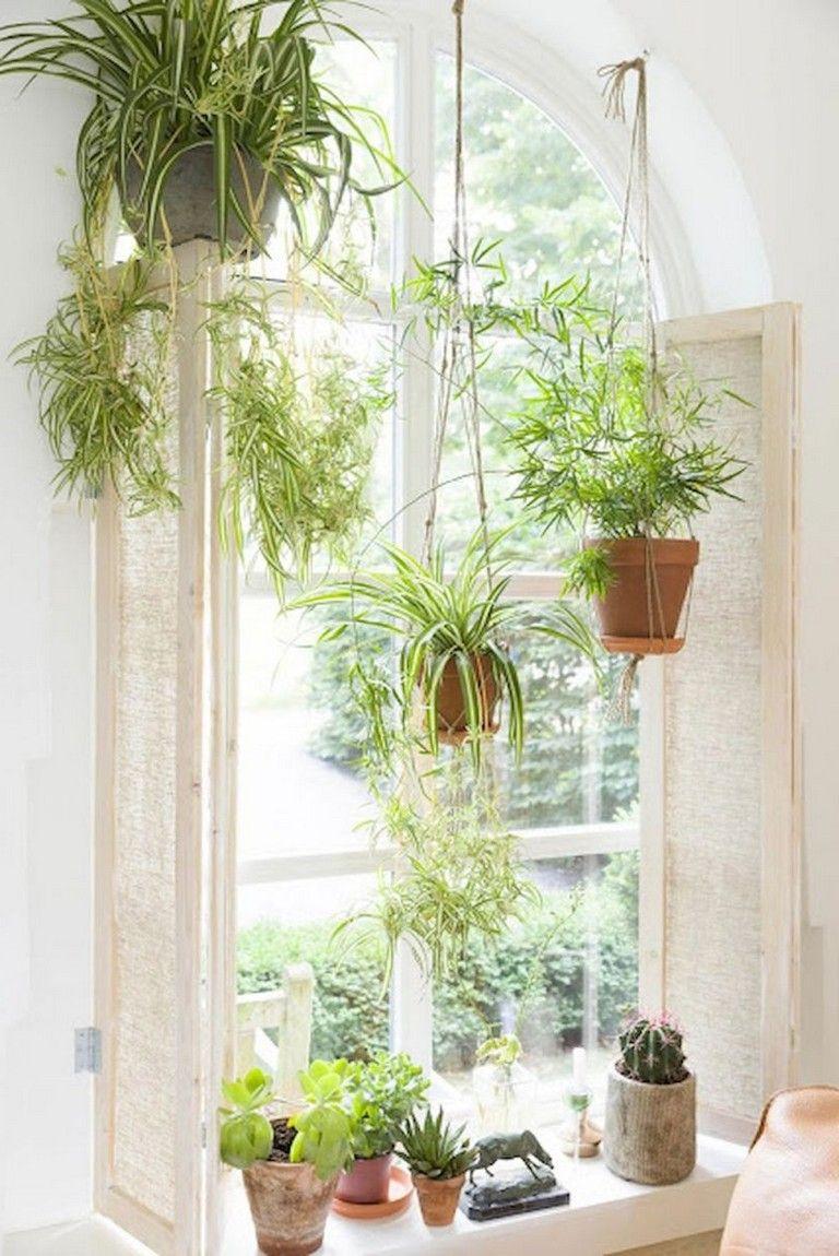 interesting indoor plants ideas for summer interiordesign interestingthings interiors also amazing hanging air decor my airplants rh pinterest