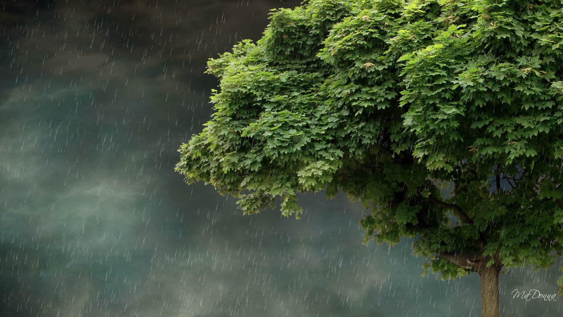Spring Rain Wallpapers Background