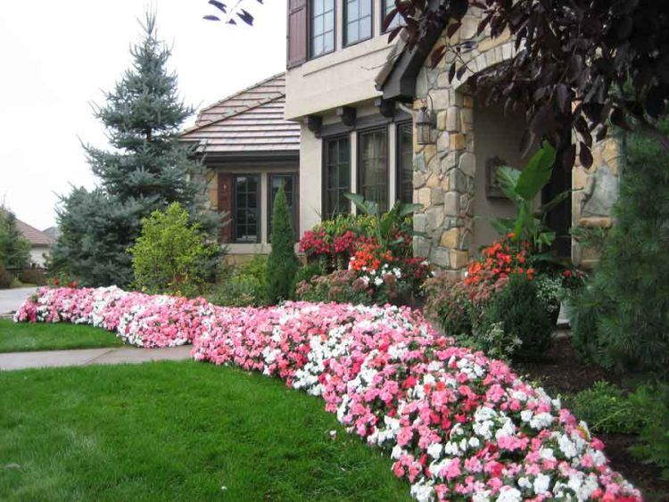 10 Types Of Flowers For The Best Curb Appeal In 2020 Small Front Yards Front Yards Curb Appeal Front Yard Landscaping