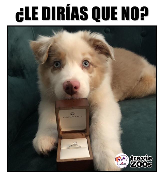 Seria Imposible Memes De Animales Tiernos Fotos De Perros Chistosos Amor Animales Frases