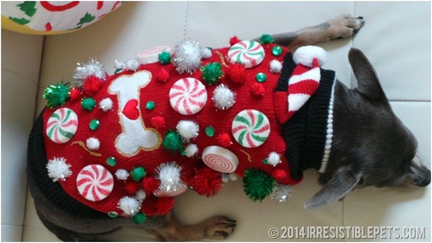 Ugly Dog Christmas Sweaters.Pin On Pets Animals